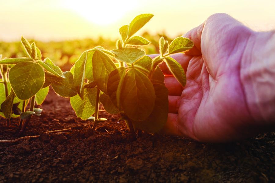 Understanding GMOs: No hype just the basics